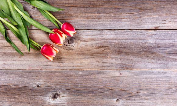 Seasonal tulips on stressed wood background
