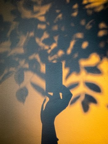 Abstract scene of hand holding compact camera photograph tree in shadow with warm light.