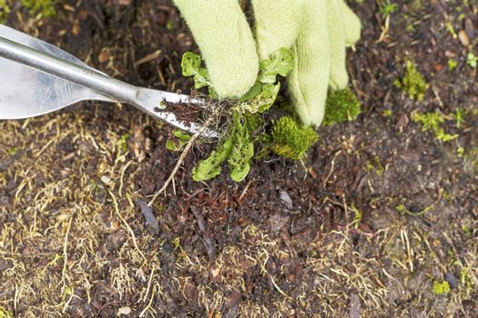 Removing Weed from the root