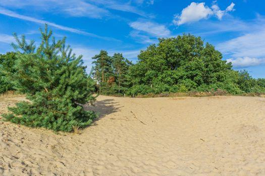 beautiful sandy plain in the forest meadow landscape
