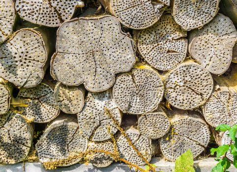 insect house shelter in tree trunk background texture
