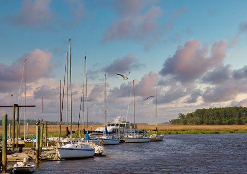 Seagulls at Marsh Docks at Dusk