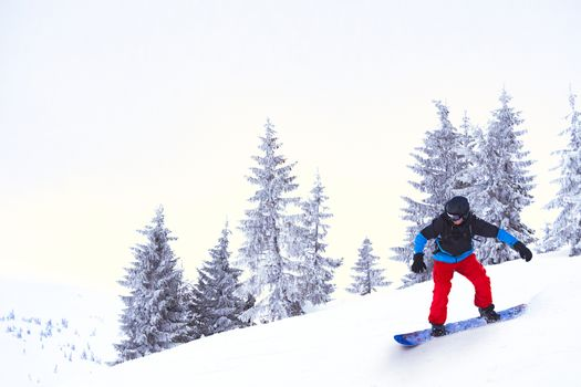 Snowboarder Riding Snowboard in the Beautiful Mountains Forest. Snowboarding and Winter Sports Concept.