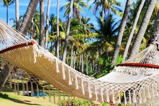 Hammock between two palm trees on the beach. Pineapple island, Vietnam