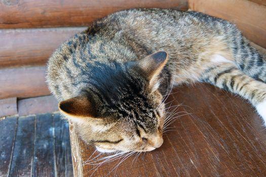 Beautiful dark cat lies on the table and sleeps