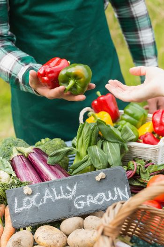 Farmer selling organic peppers