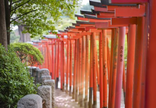 Rays of sun passing between red Torii portal of the Shintoist Nezu shrine of the 18th century in Tokyo.