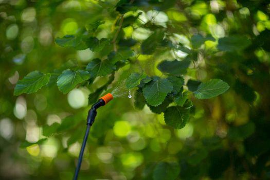 Close-up of pesticide sprayed on twig