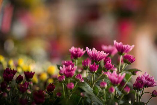 Flowers in florist shop
