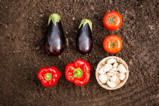 Overhead view of vegetables on dirt at garden