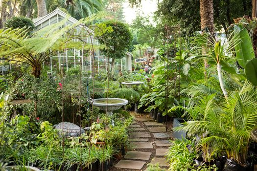 Footpath amidst plants at greenhouse