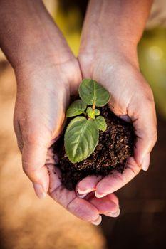 Overhead view of seedling in hands at garden