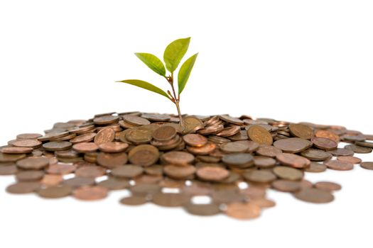 Close-up of plant grows from pile of coins