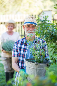 Senior man standing with pot plant in garden