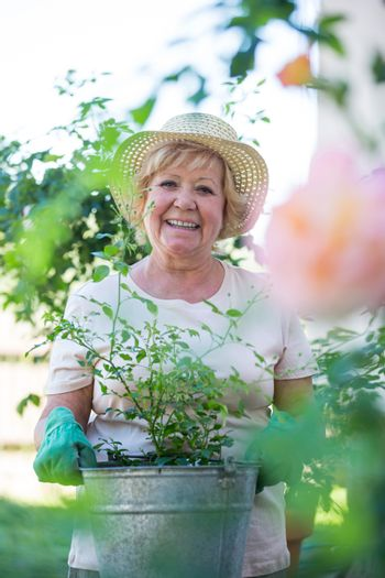 Senior woman standing with pot plant in garden
