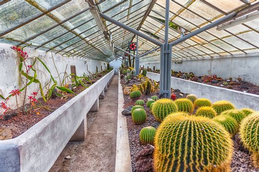 Cultivation of cactus and other succulent plants inside a greenhouse
