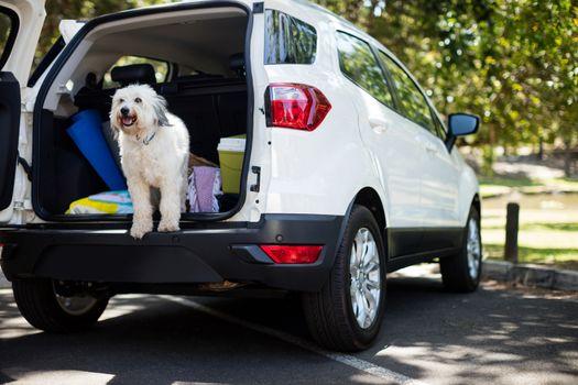 Pet in car trunk