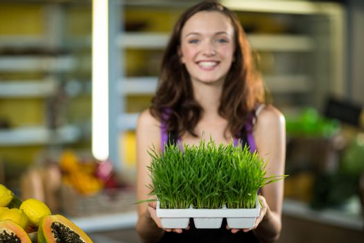 Smiling shop assistant holding a tray of herbs in health grocery shop