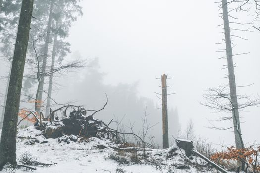 Misty weather in a forest at wintertime
