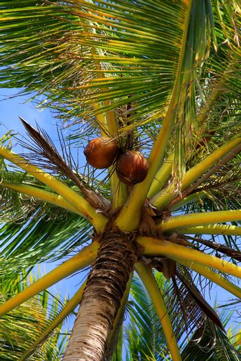 Tree of a coco the bottom view