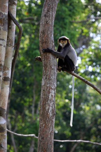 Monkey on a tree in a zoo. Vietnam, Phu Quoc