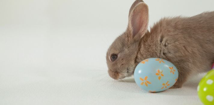 Easter egg and Easter bunny