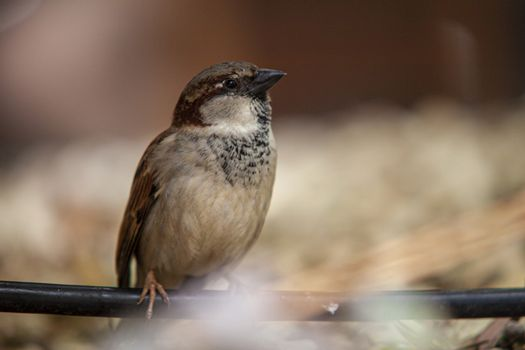 Sparrow in the middle of nature in Dominican Republic