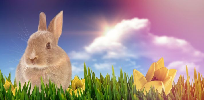 Close-up of Easter bunny against bright blue sky with clouds