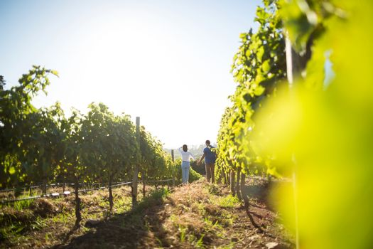 Distant view of couple holding hands at vineyard