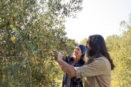 Couple interacting while harvesting olives