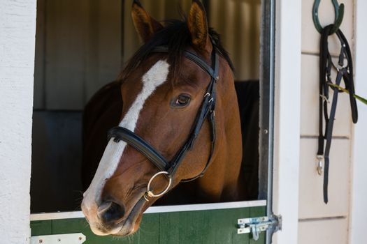 Horse at stable