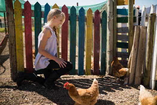 Girl looking at the hen in farm