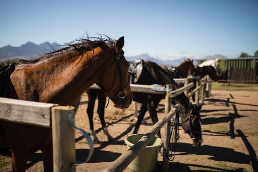 Horses standing in the ranch