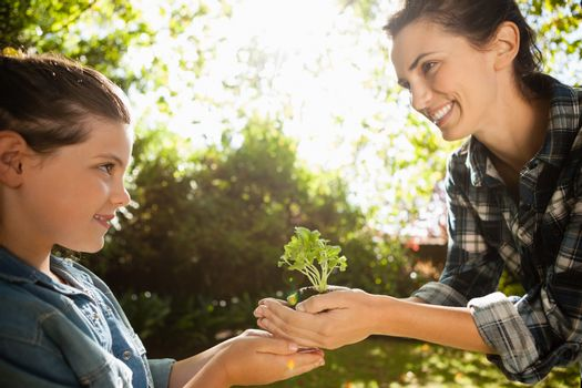 Smiling mother giving seedling to daughter