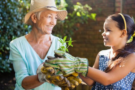 Smiling granddaughter and grandmother holding seedling