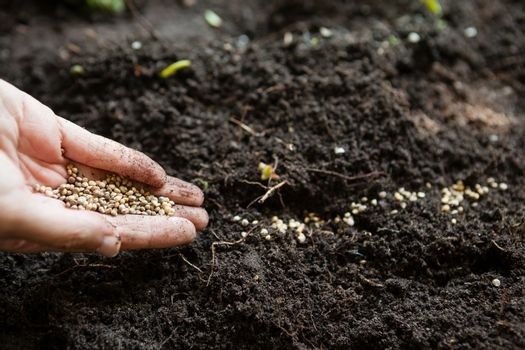 Cropped hands of woman with seeds over dirt
