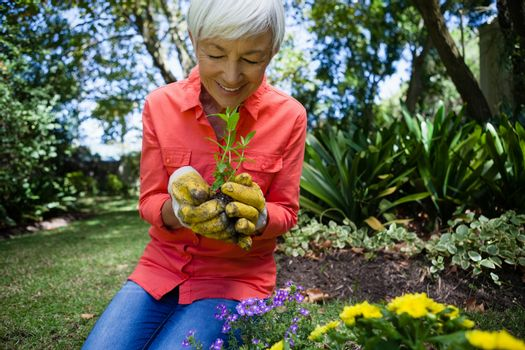 Smiling senior woman planting seedling