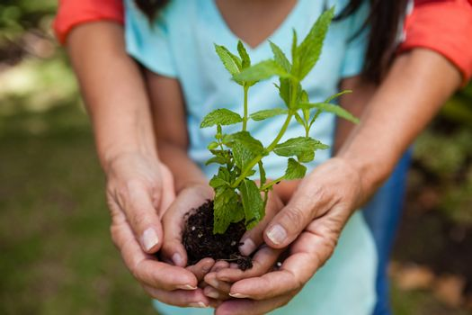 Midsection of grandmother and granddaughter holding seedling