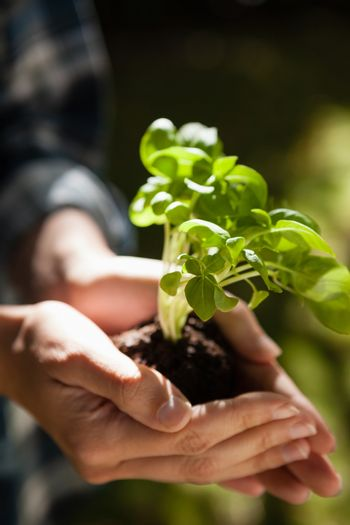 Cropped image of woman holding seedling