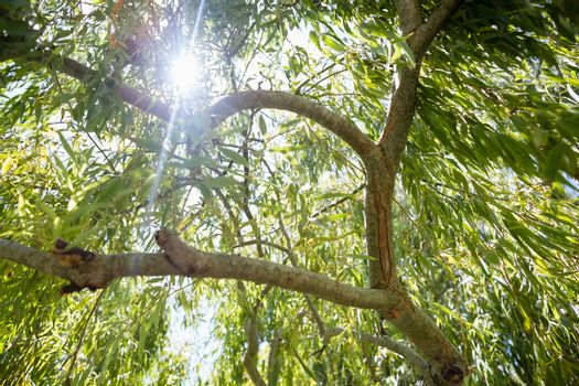 View of sunlight passing through trees
