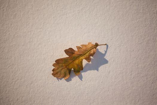 Overhead of autumn leave