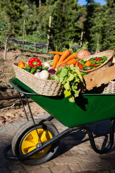 Various fresh vegetables in wheelbarrow
