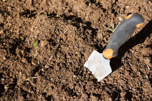 Trowel in soil