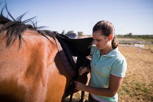 Female jockey fastening saddle