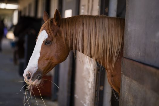Brown horse at stable