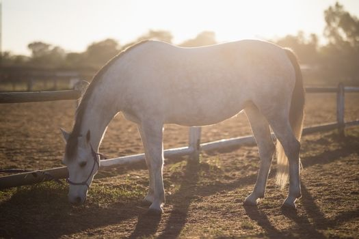 Horse grazing on field at barn