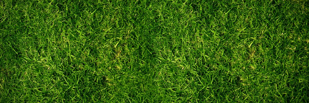 Closed up view of grass