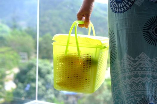 Woman hand holding plastic box light-green container with fruits for transportation closeup.
