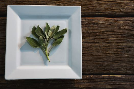 Sage herb in a tray