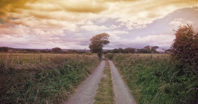 Dirt road amidst grassy landscape
